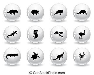 web, australiano, bottoni, icone animali