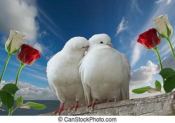 wihte, amore, colombe