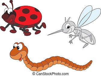 zanzara, coccinella, verme