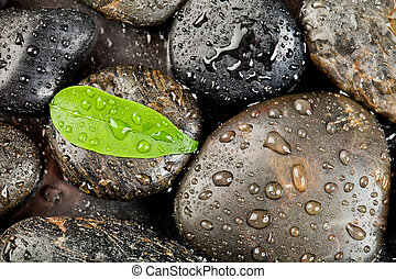 zen, freshplant, pietre, gocce, acqua