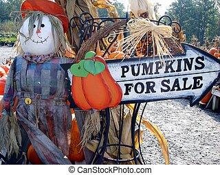 zucche, vendita